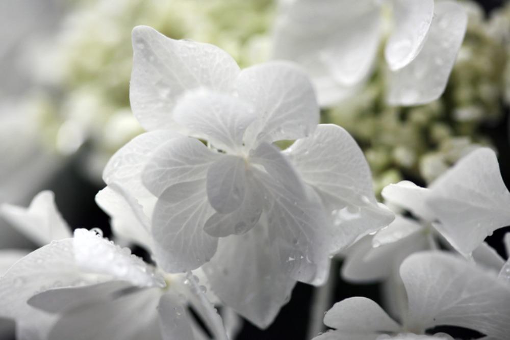 母の誕生日_e0048332_14474566.jpg