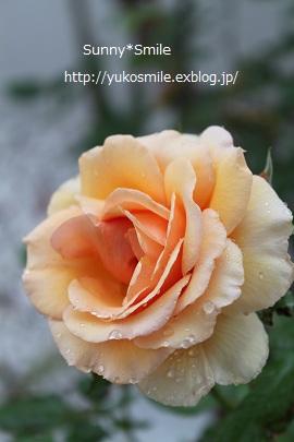c0178855_045615.jpg