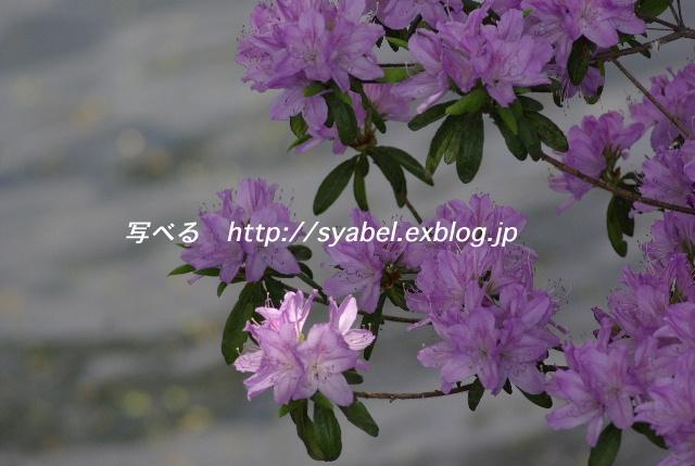 c0153764_20485615.jpg