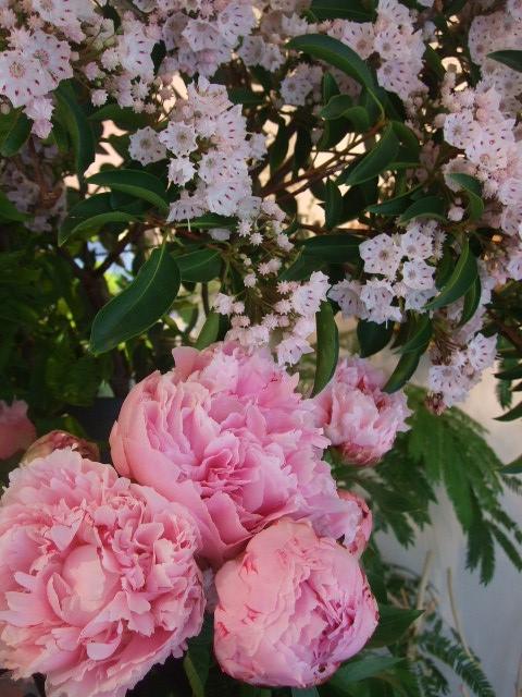 オークリーフ(バラの季節です)_f0049672_17195137.jpg