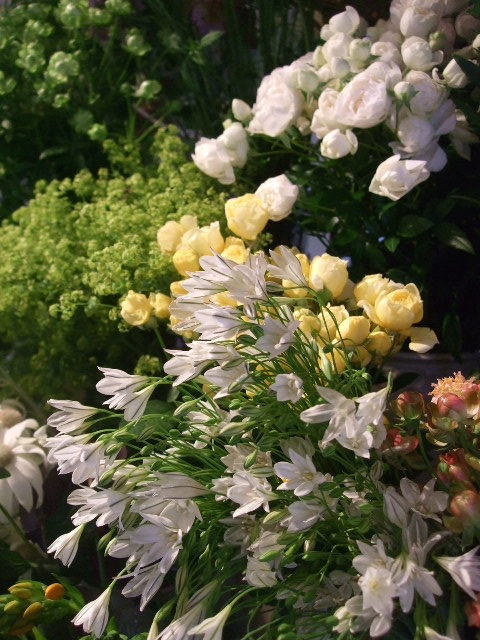 オークリーフ(バラの季節です)_f0049672_17203324.jpg