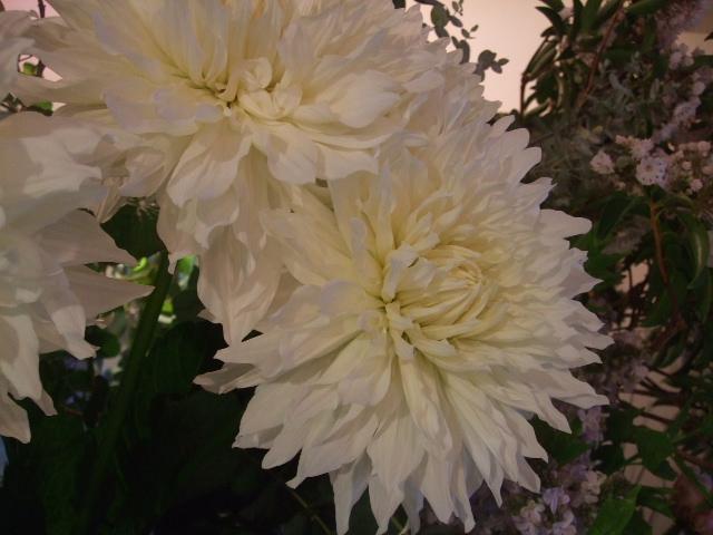 オークリーフ(バラの季節です)_f0049672_17223044.jpg