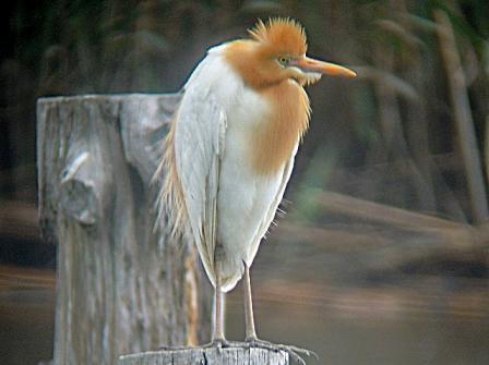★先週末の鳥類園(2011.5.7~8)_e0046474_13573391.jpg