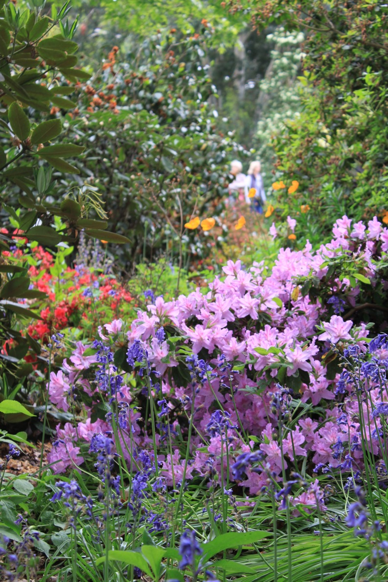 Wisley Garden_a0137487_19115588.jpg