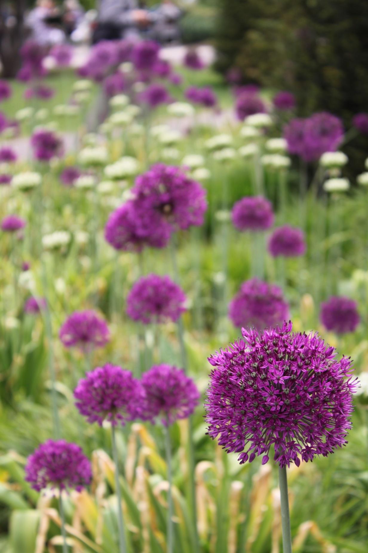 Wisley Garden_a0137487_1913051.jpg