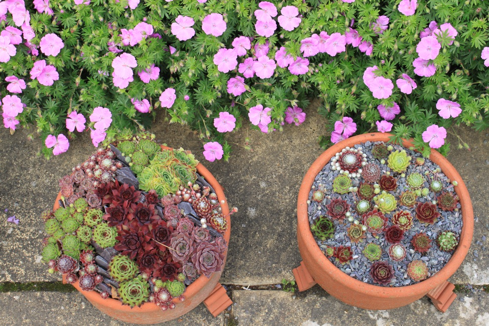 Wisley Garden_a0137487_19191791.jpg