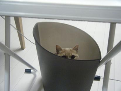 ゴミ箱猫_a0128290_1374162.jpg