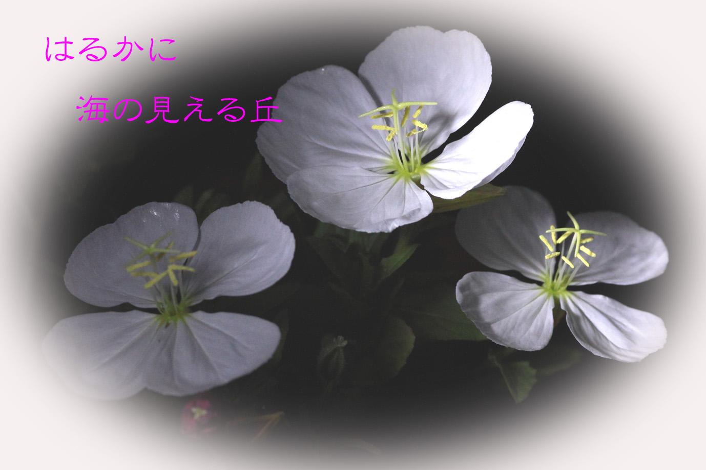 b0012595_20423364.jpg