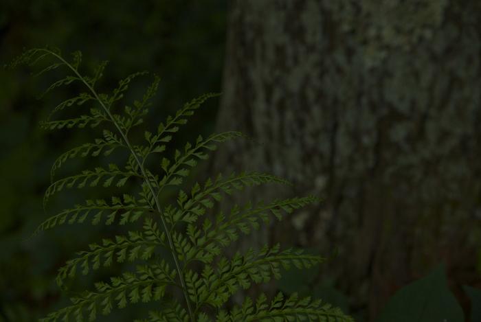 新緑_c0127403_2195954.jpg