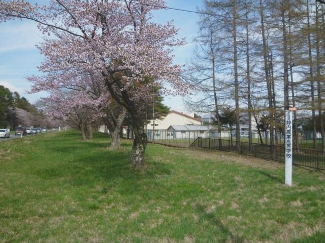 1543)①「静内 二十間道路桜並木 五分咲き 2011年5月11日(水) 晴」_f0126829_9453247.jpg