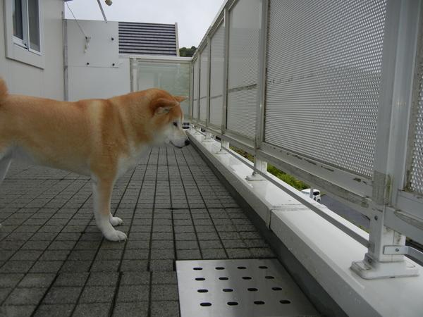2011年5月12日(木)雨上がり~!_f0060461_1051407.jpg