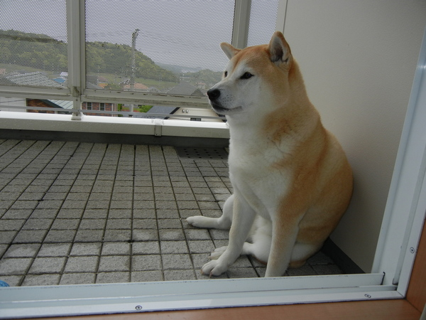 2011年5月12日(木)雨上がり~!_f0060461_10531551.jpg