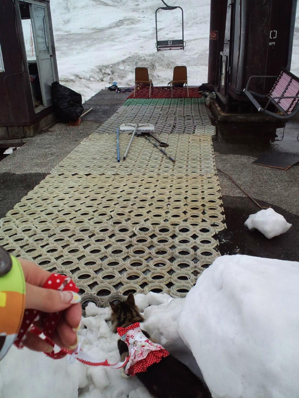 りぼんさんと⭐️谷川岳天神平スキー場_c0151965_12412433.jpg