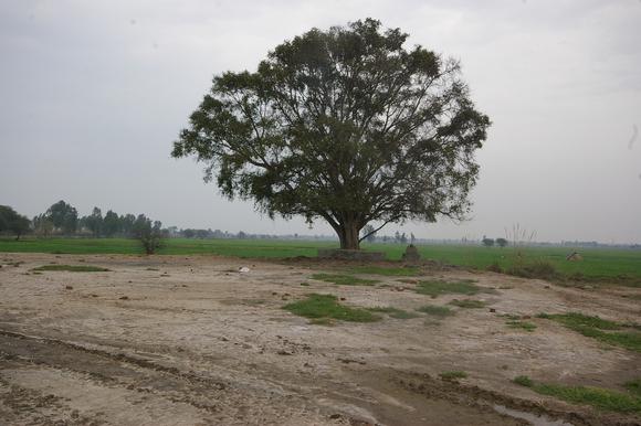 インド滞在記2011 その8: India 2011 Part8_a0186568_22301519.jpg