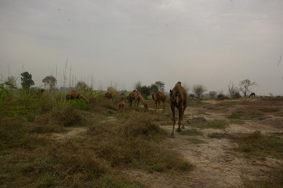 インド滞在記2011 その8: India 2011 Part8_a0186568_223155.jpg