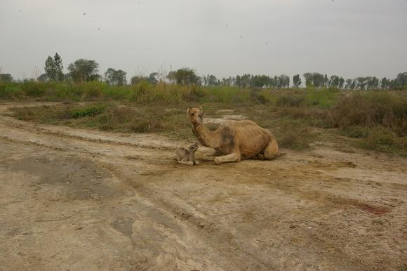 インド滞在記2011 その8: India 2011 Part8_a0186568_2232417.jpg