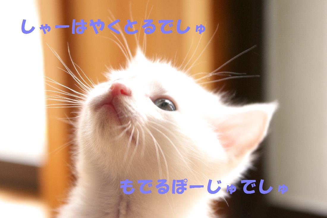 f0197682_167178.jpg