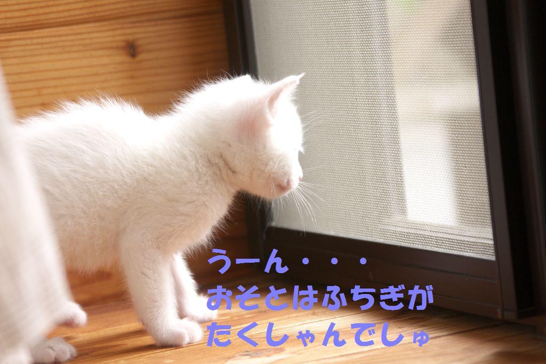 f0197682_1672574.jpg