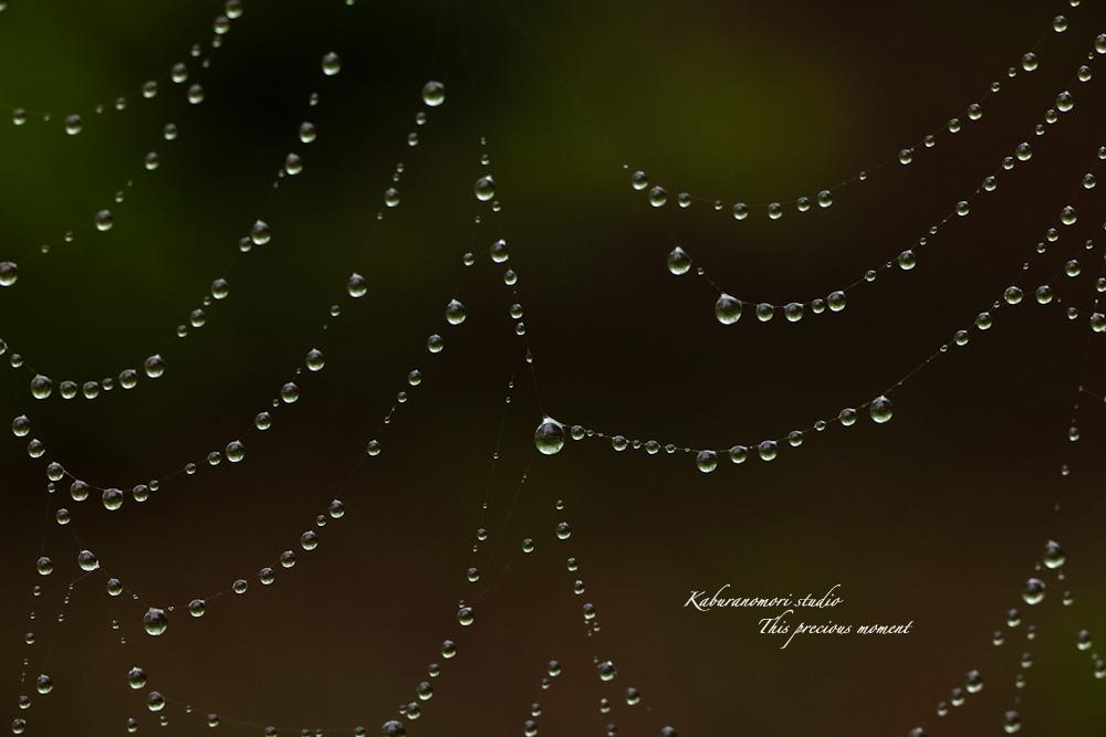 雨上がりの宝石_c0137403_2242425.jpg