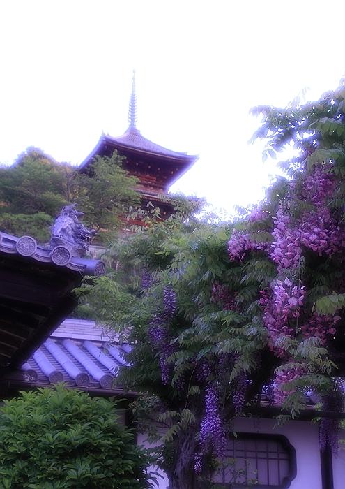 """尾道 """"西国寺・藤の花""""_a0140608_819325.jpg"""