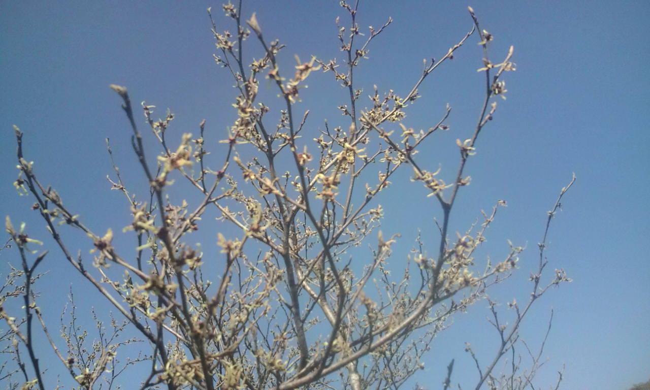5月13日(金) ・・・ 氷ノ山、晴れ!_f0101226_2224544.jpg