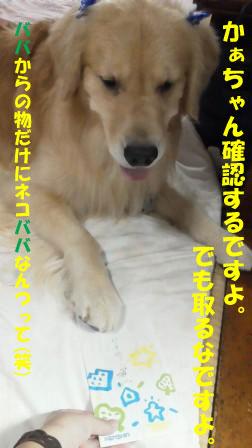 f0176830_1945308.jpg
