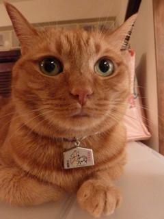 猫神神社猫 しぇる編。_a0143140_23463720.jpg