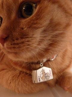 猫神神社猫 しぇる編。_a0143140_23473655.jpg