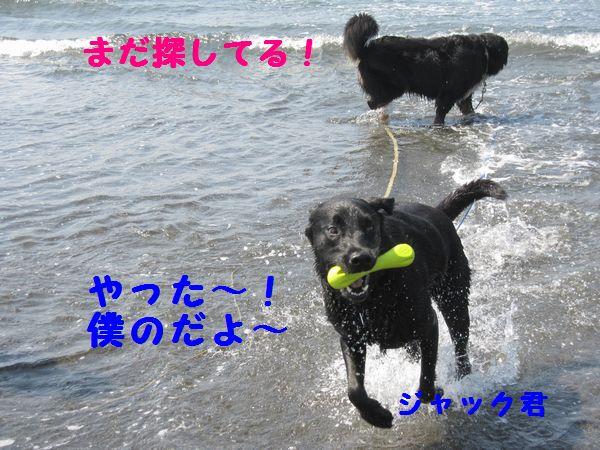 a0108146_201551.jpg