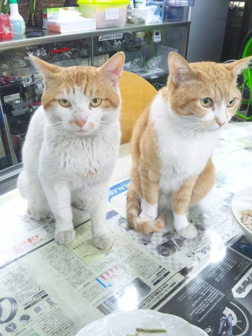 猫らしい猫!と・・・犬らしい猫?・・・_a0163159_264392.jpg
