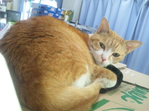 猫らしい猫!と・・・犬らしい猫?・・・_a0163159_273677.jpg