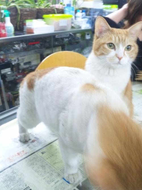 猫らしい猫!と・・・犬らしい猫?・・・_a0163159_27517.jpg