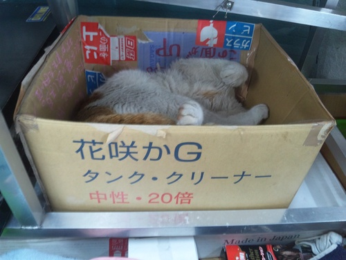 猫らしい猫!と・・・犬らしい猫?・・・_a0163159_282465.jpg