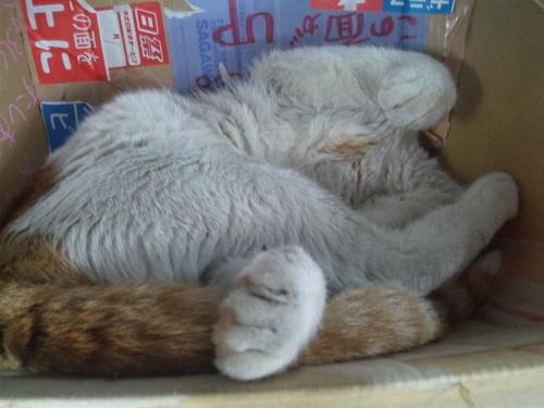 猫らしい猫!と・・・犬らしい猫?・・・_a0163159_284162.jpg