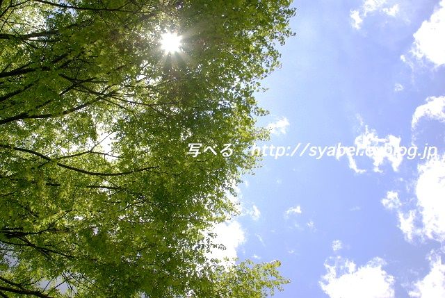 c0153764_1921355.jpg