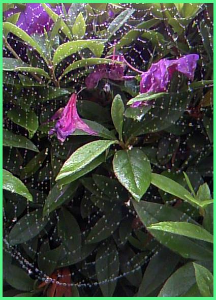雨の青山、隠れ小路。_e0236072_0362159.jpg