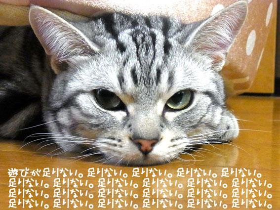 b0209480_7401758.jpg