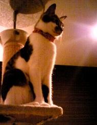 猫とご飯!_e0202182_21265288.jpg