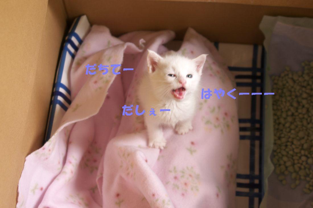 f0197682_22545767.jpg