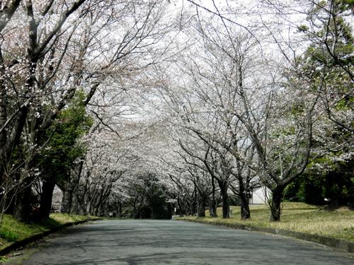 桜道.._b0133890_163395.jpg