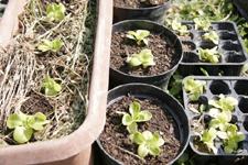食べたら植えるのリズム~5月の畑_f0106597_1845239.jpg