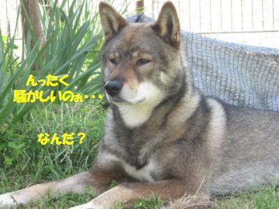 f0143123_2011361.jpg