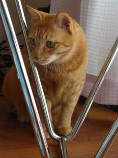 猫のお友だち ちゃーくんちょびくん編。_a0143140_23502033.jpg