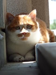 猫のお友だち ちゃーくんちょびくん編。_a0143140_2352726.jpg