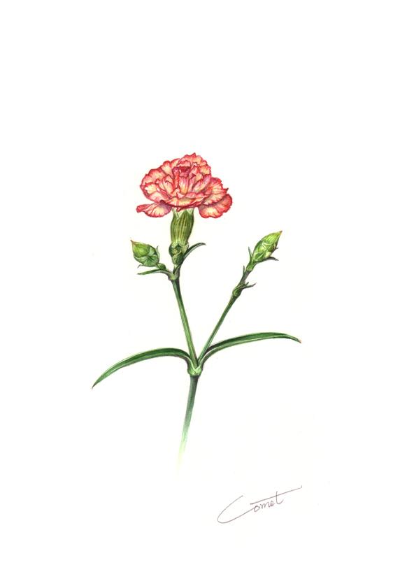 母の日のお花_c0206645_1755545.jpg