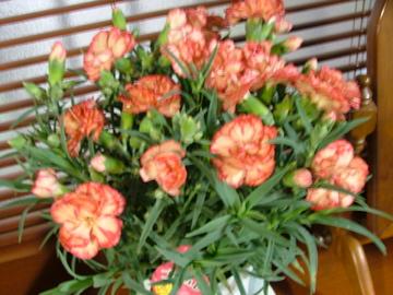 母の日のお花_c0206645_17563844.jpg