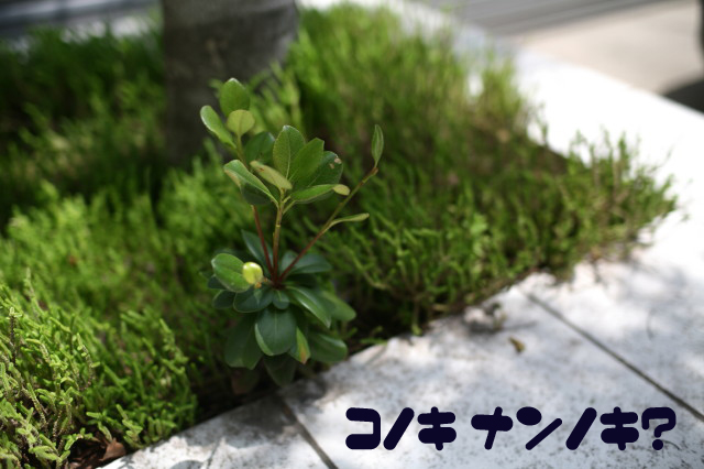 b0078651_13191792.jpg