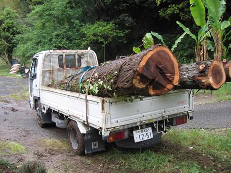 杉を極める_a0157159_9163512.jpg
