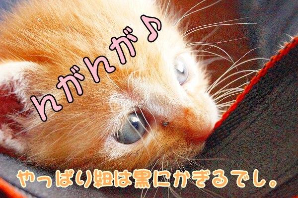 a0201967_2012323.jpg