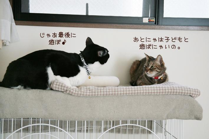 鞠姫の卒業_c0223478_11215122.jpg